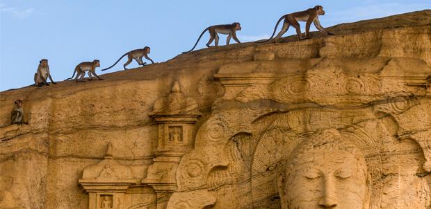 El Reino de los Monos de Disney llega en abril