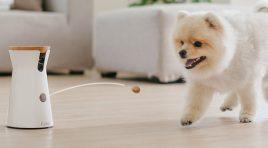 Conoce a Furbo, la cámara que cuida y premia a tu perro