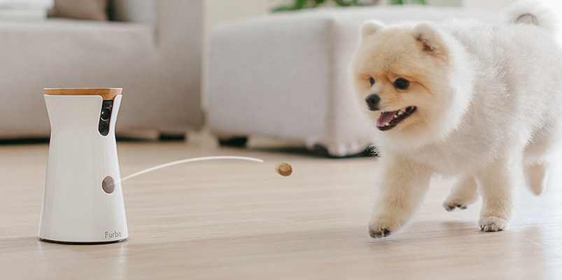 El Internet de las Cosas beneficia a las mascotas y sus dueños