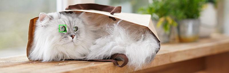 Sony Auto Foco Animal gato