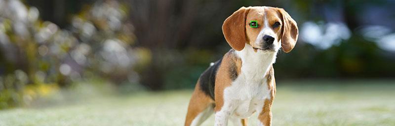 Sony Auto Foco Animal perro