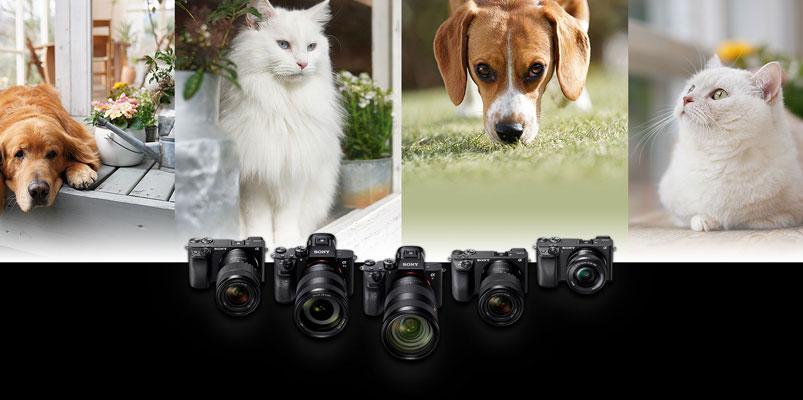 Aprovecha la función Auto Foco Animal de tu Sony α y gana una cámara