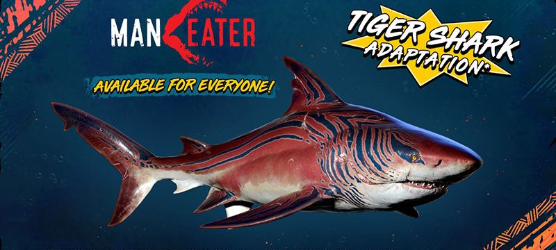 Tiger Shark Maneater