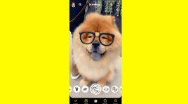 Con su nuevo Scan, Snapchat te dice qué raza es tu perro